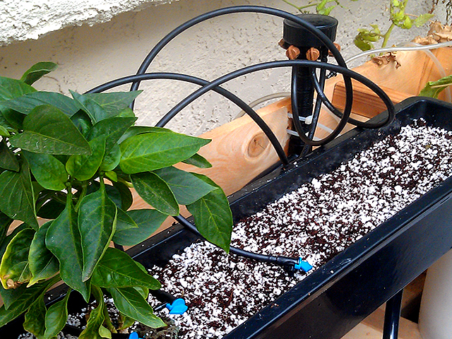 A Simple Hydroponic Drip System Gardenisto
