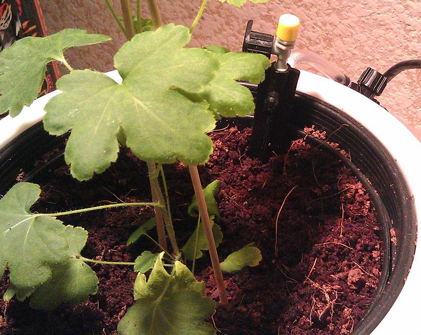 Coco soiless growing medium