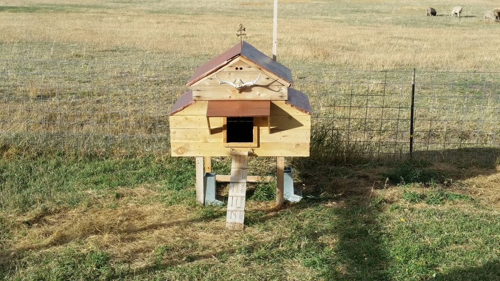 Chicken Coop, Remodeled