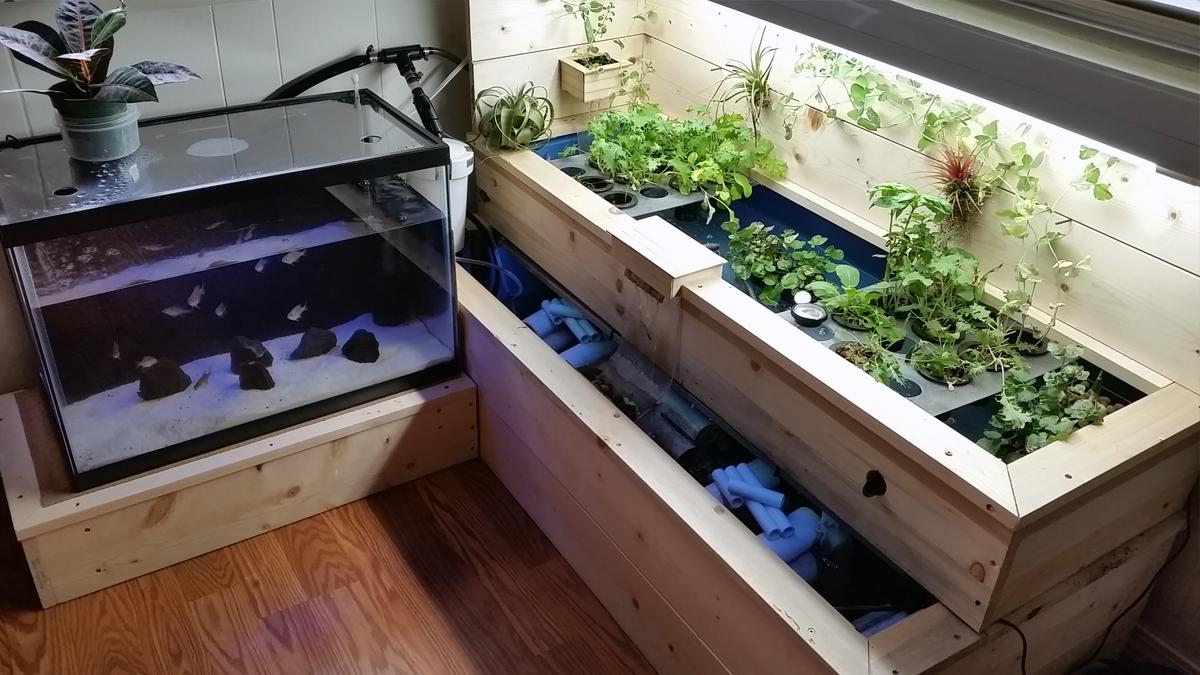 DIY Aquaponics System 2a